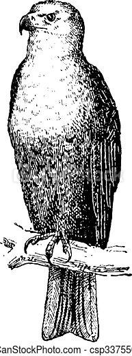 Eagle, vintage engraving. - csp33755064