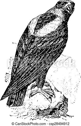 Eagle, vintage engraving. - csp28494912