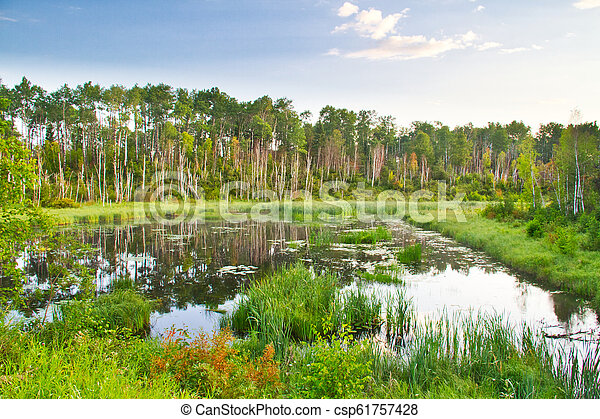 Early Morning Light on a Forest Lake - csp61757428