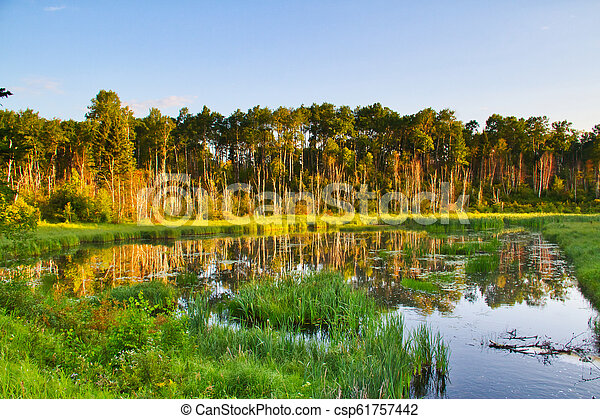 Early Morning Light on a Forest Lake - csp61757442