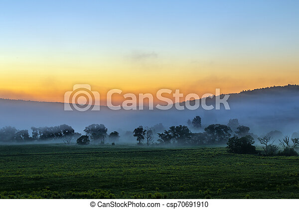 early morning sunrise landscape with bushes in fog near river at summer - csp70691910