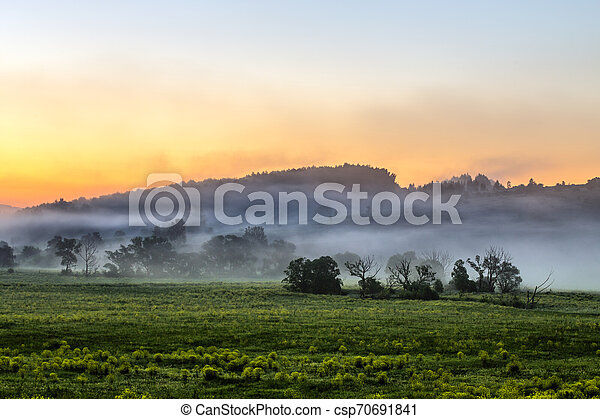 early morning sunrise landscape with bushes in fog near river at summer - csp70691841