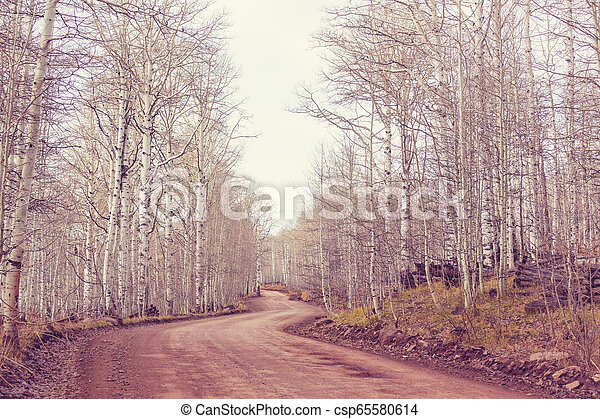 Early spring forest - csp65580614