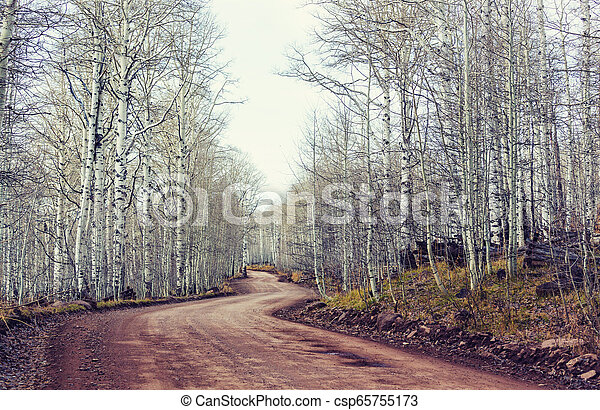 Early spring forest - csp65755173