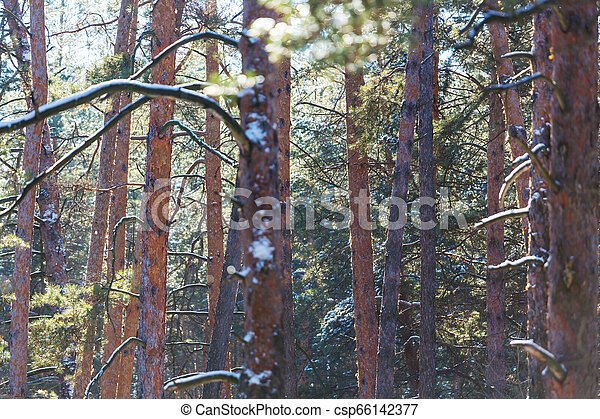 Early spring forest - csp66142377