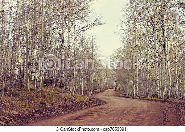 Early spring forest - csp70533911