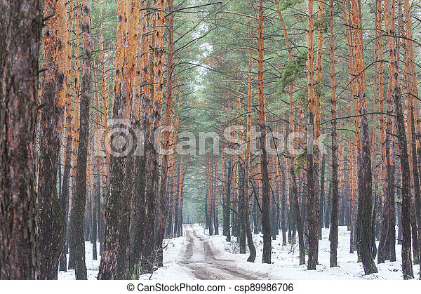 Early spring forest - csp89986706