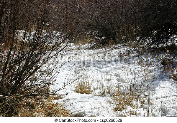 Early Spring - csp0268529