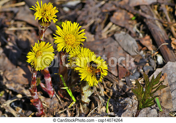 Early Spring Yellow Flowers A Beautiful Spring Season Wild Forest