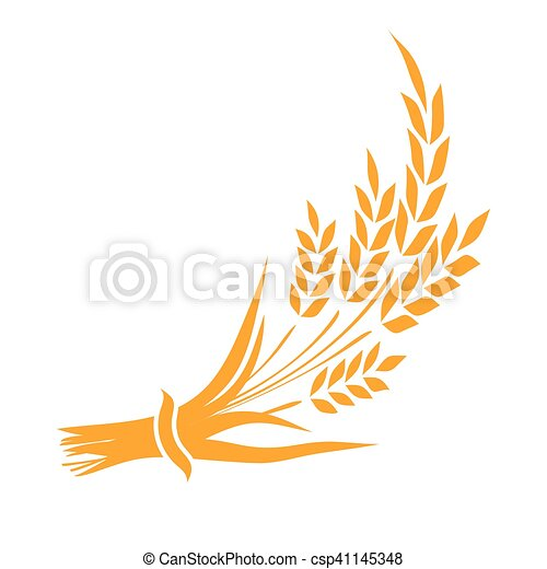 Ears and grains of wheat on a white background. Vector illustration. - csp41145348