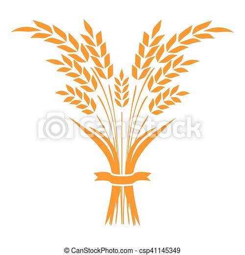 Ears and grains of wheat on a white background. Vector illustration. - csp41145349