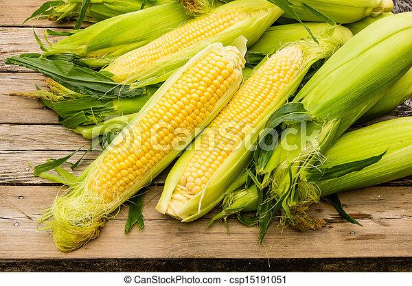 Ears of fresh yellow sweet corn - csp15191051