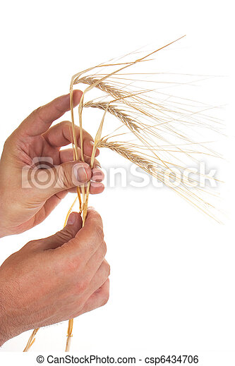 ears of rye in the hands - csp6434706