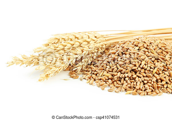 Ears of wheat and wheat grains on white background - csp41074531
