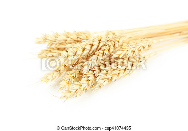 Ears of wheat isolated on white - csp41074435