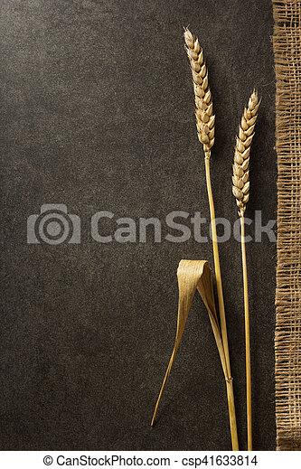 ears of wheat on black - csp41633814