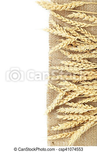 Ears of wheat on white background - csp41074553
