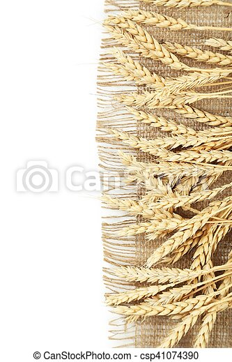 Ears of wheat on white background - csp41074390