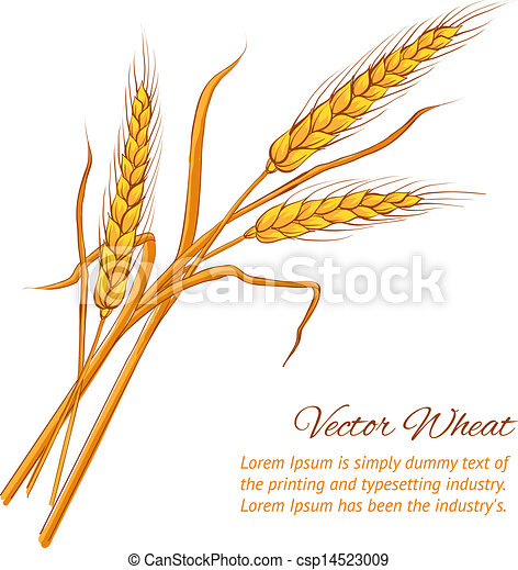 Ears of wheat. - csp14523009
