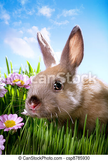 easter Baby rabbit on green grass - csp8785930