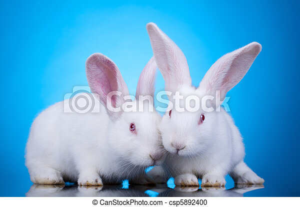 Easter bunnies - csp5892400