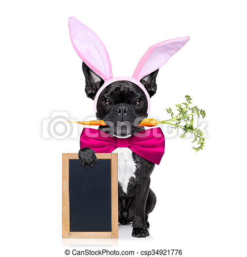 easter bunny dog - csp34921776