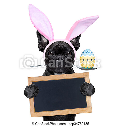 easter bunny dog - csp34760185