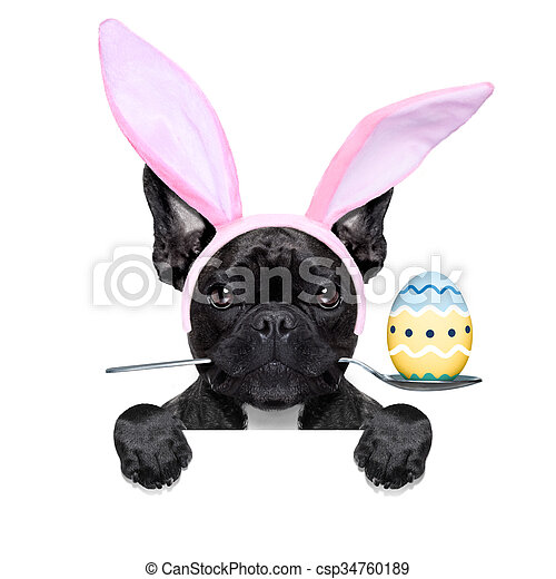 easter bunny dog - csp34760189