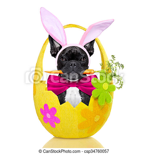 easter bunny dog - csp34760057