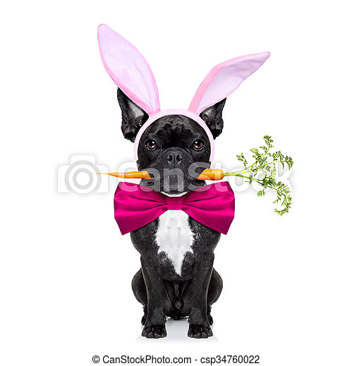 easter bunny dog - csp34760022
