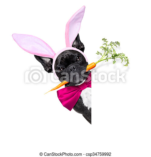 easter bunny dog - csp34759992