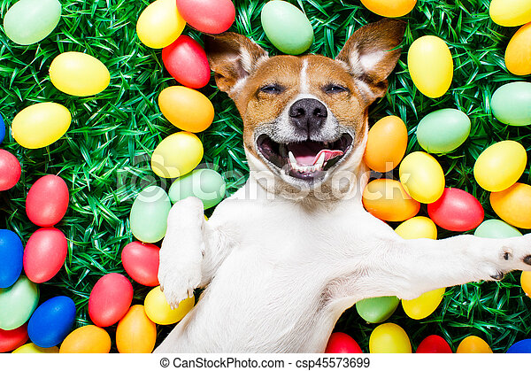 easter bunny dog with eggs selfie - csp45573699