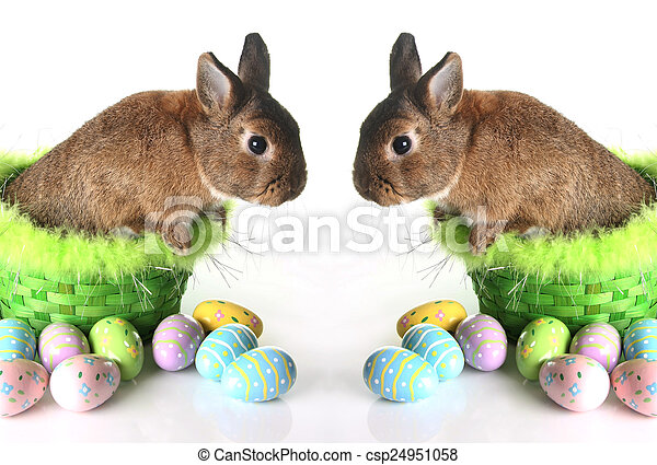 Easter bunny - csp24951058