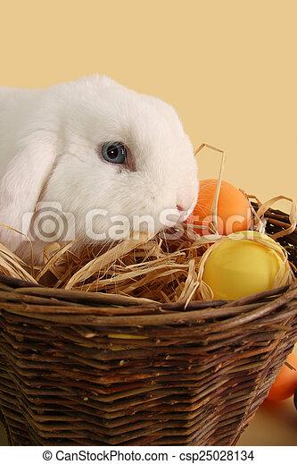 Easter bunny - csp25028134