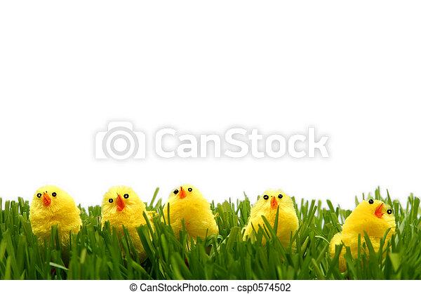 Easter chicken - csp0574502