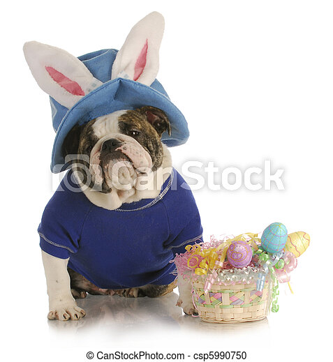 easter dog - csp5990750