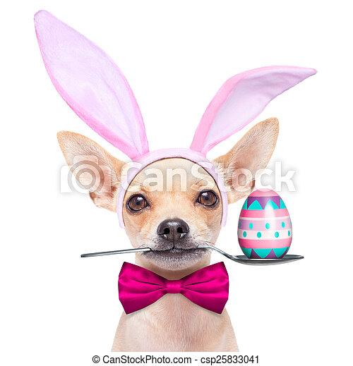 easter egg bunny dog - csp25833041