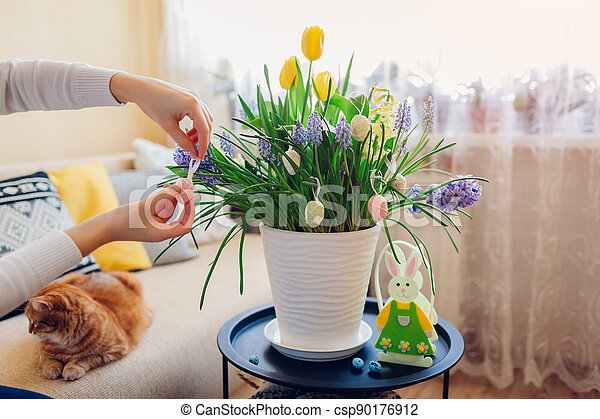 Easter home decor. Woman hangs eggs on spring blooming flowers in pot. Yellow hyacinths, tulips, muscari. - csp90176912