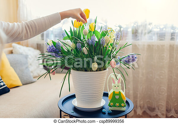 Easter home decor. Woman hangs eggs on spring blooming flowers in pot. Yellow hyacinths, tulips, muscari. Space - csp89999356