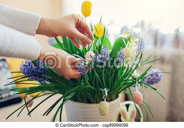 Easter home decor. Woman hangs eggs on spring blooming flowers in pot. Yellow hyacinths, tulips, muscari. Space - csp89999396