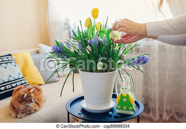 Easter home decor. Woman hangs eggs on spring blooming flowers in pot. Yellow hyacinths, tulips, muscari. Space - csp89999334