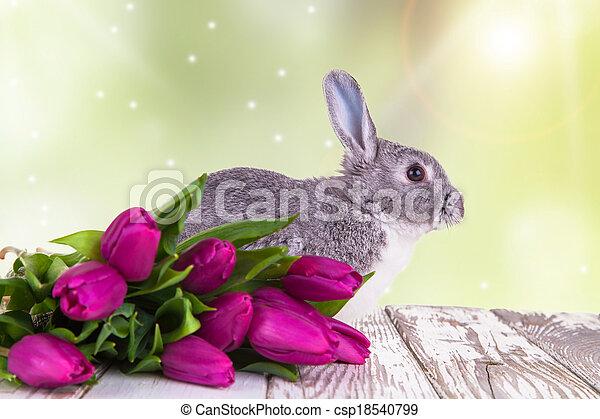 Easter rabbit - csp18540799
