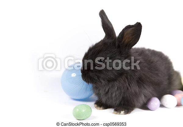 Easter Scene - csp0569353