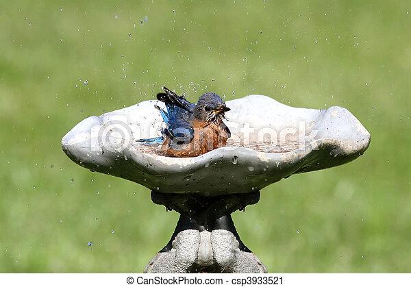 Eastern Bluebird - csp3933521