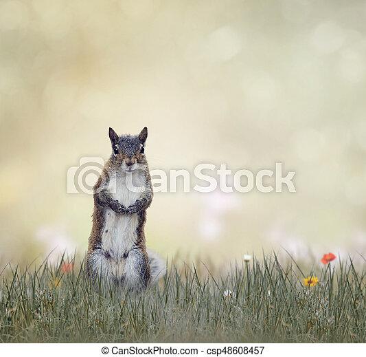 Eastern gray squirrel - csp48608457