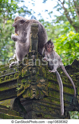 Eating monkey with a baby - csp10838362