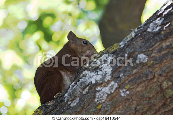 eating squirrel on a branch - csp16410544