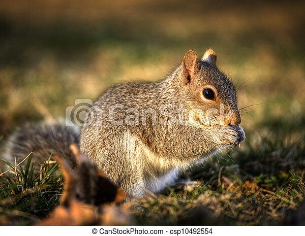 Eating squirrel - csp10492554