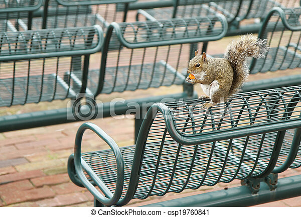 eating squirrel - csp19760841