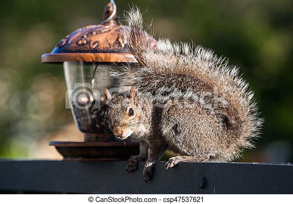 Eating squirrel - csp47537621